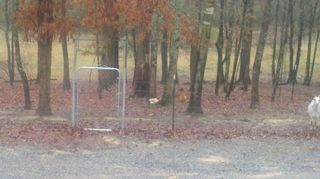 q need ideas for a cheap fence, fences, due to some extraordinary bad driving from some pigs that loved rubbing up against the fence gate we had to restrengthen ours in most cases that is not necessary