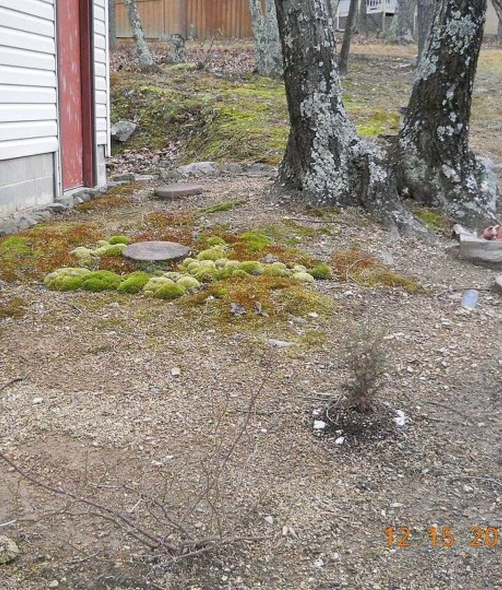 last winter... poor pitiful garden... the moss grows everywhere around here