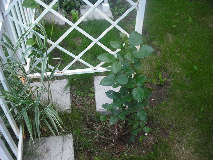 sharing my roses and flowers with garden 2, flowers, gardening, outdoor living