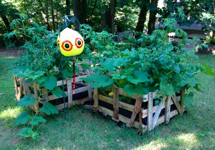 Formerly trashed pallet crates, now a beautiful and productive raised-bed garden!