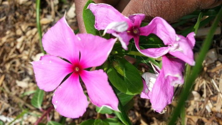My plant 1