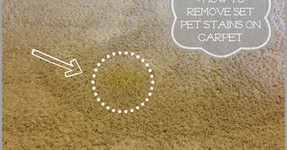 How To Remove Pet Stains From Carpet Hometalk