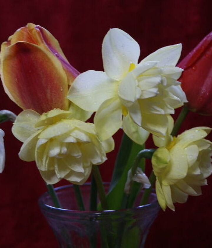 the flowers in my garden so far this spring, flowers, gardening