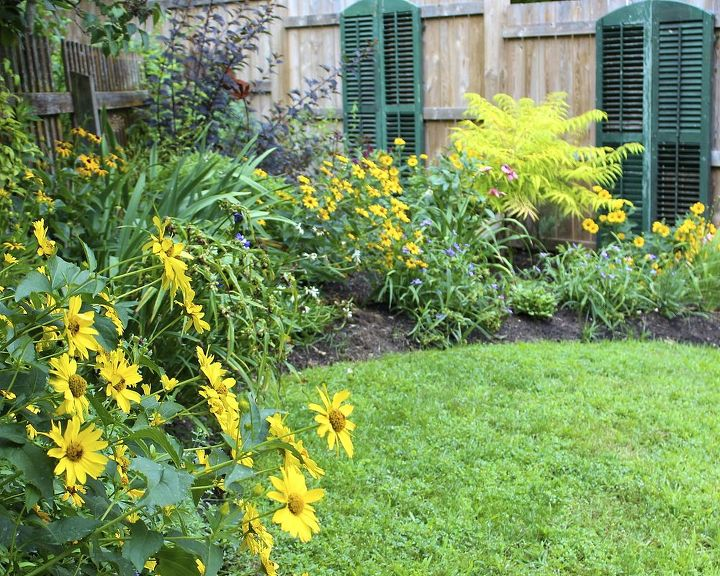 Our secret garden is filled with heliopsis, daylilies, roses and small shrubs.