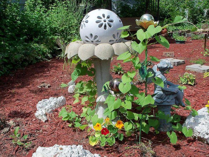 Nasturtium and Spanish Flag vines growing around birdbath