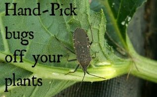 5 tips for organic pest control in the garden, gardening, pest control