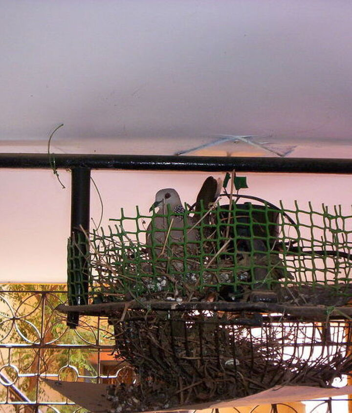 BIRD IN FAN NEST.