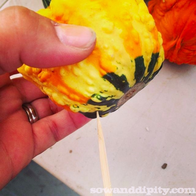 All you need to do is poke a skewer in the bottom to turn the gourd into a planter pick