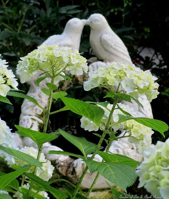 Hydrangeas blooming by the fountain