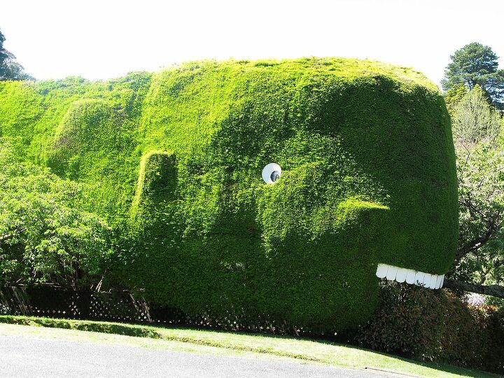 Glenhaven garden with the whale hedge.  They donated entry fees to guide dogs for the blind.