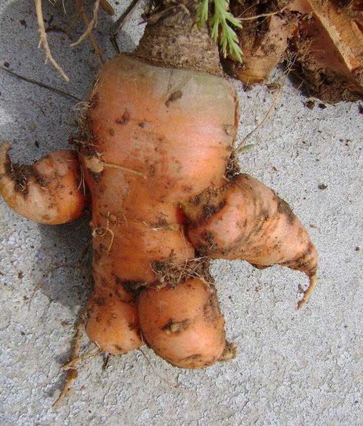 carrot arms