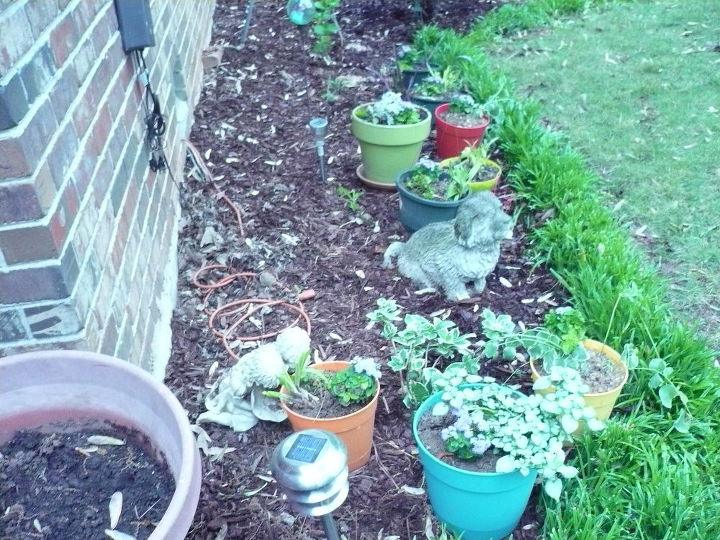 These are my colorful pots sitting in the rain to liven up before we hang them!
