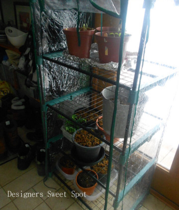 """I keep my pots in this little greenhouse until they can be planted outdoors. After only 2 weeks, they had grown about 6"""" tall. I can't wait to plant them outside!"""