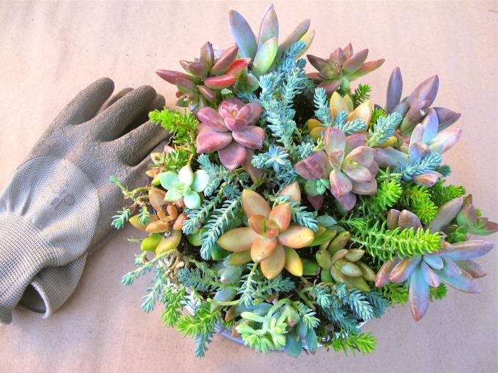 diy succulent dish garden repurpose, crafts, flowers, gardening, succulents