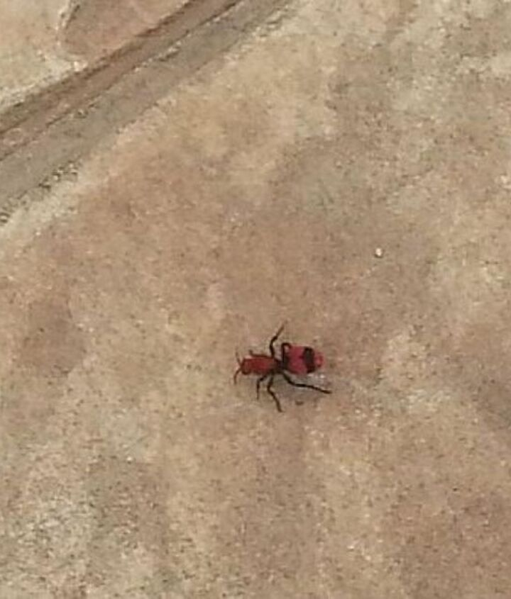 q what type bug is this, pets animals
