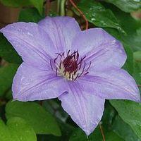 Julie @ Wife, Mother, Gardener