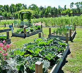 5 Tips For The First Time Vegetable Gardener, Gardening, Growing Your Own  Vegetables Is