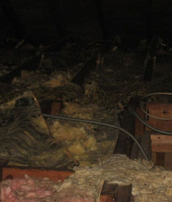 Simply layers of insulation covered with animal feces throughout all of the 1000 square foot attic we had to clean.
