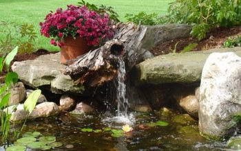 looking beyond the ordinary, landscape, ponds water features, Look beyond the ordinary