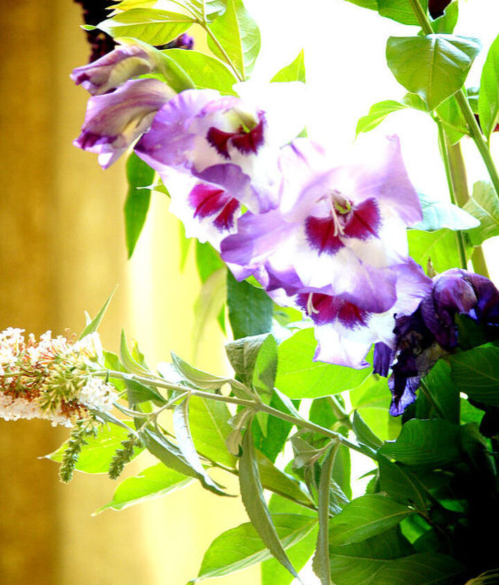 Gladiolus and Butterfly stems
