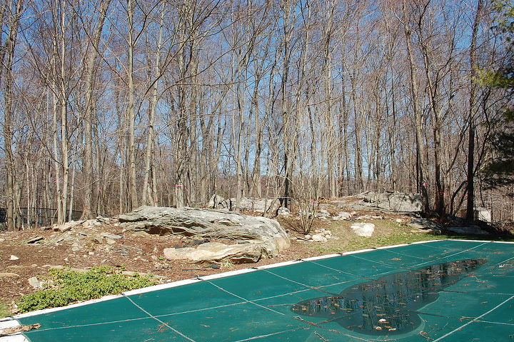 Before photo of wooded area