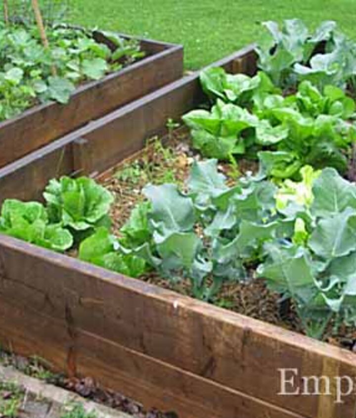 4. Use raised beds to escape bad soil. When I finally added raised beds, I could grow anything I wanted like these veggies .