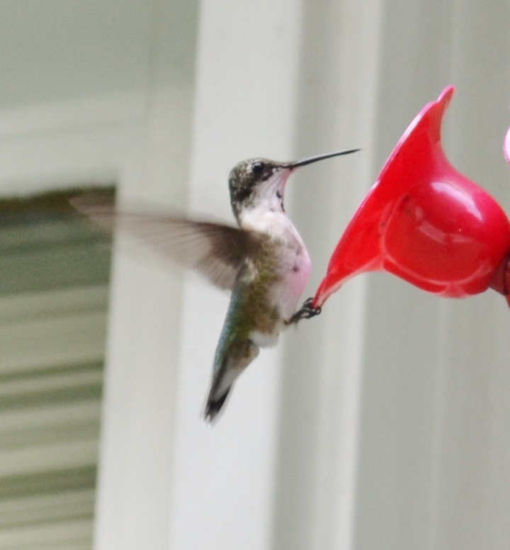 Did you know that hummingbirds migrate throughout the winter and are in need of a constant supply of nourishment?