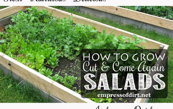 How to Grow 'Cut and Come Again' Salad Greens