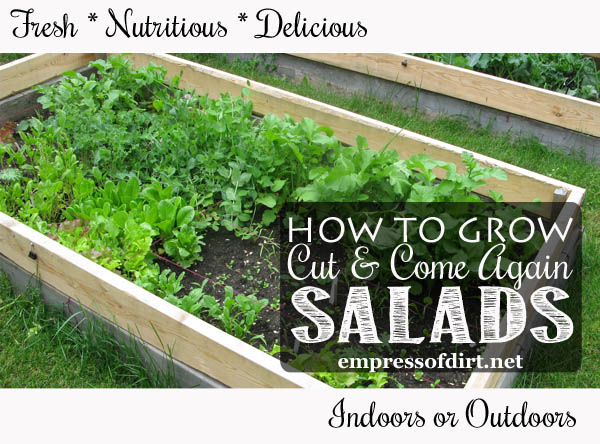 You can grow salad greens indoors or outdoors any time of year. Yes, even beginner gardeners!