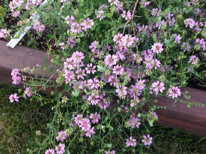 weed, gardening, It is in my vegetable garden bed
