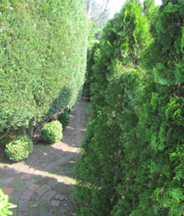 A winding path makes any space seem longer.