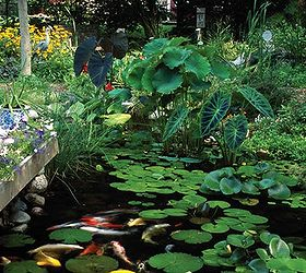 The Secret to a Low-Maintenance, Healthy Pond