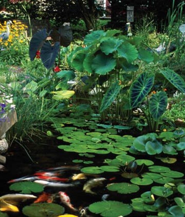 5. Plants. Pond plants eat the same nutrients as algae and will help keep the algae population down.