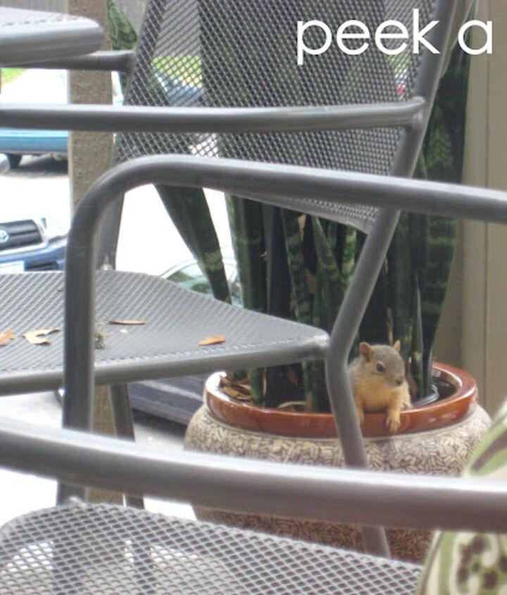 diy squirrel feeder, crafts, pets animals