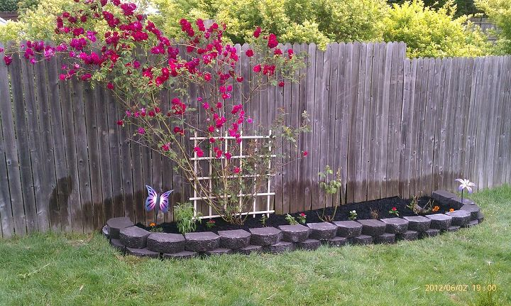 The new rose garden we did this yr.