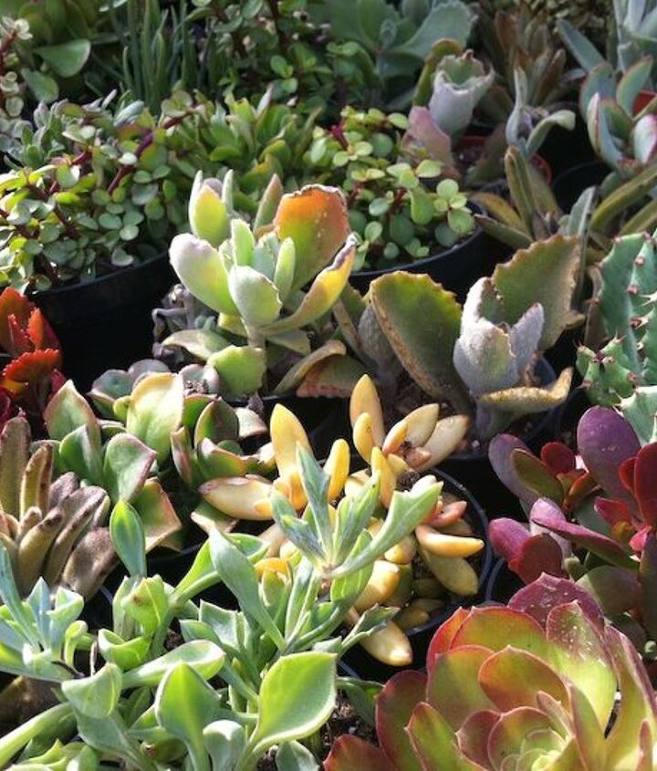 3inch pots from Home Depot $1.99 each