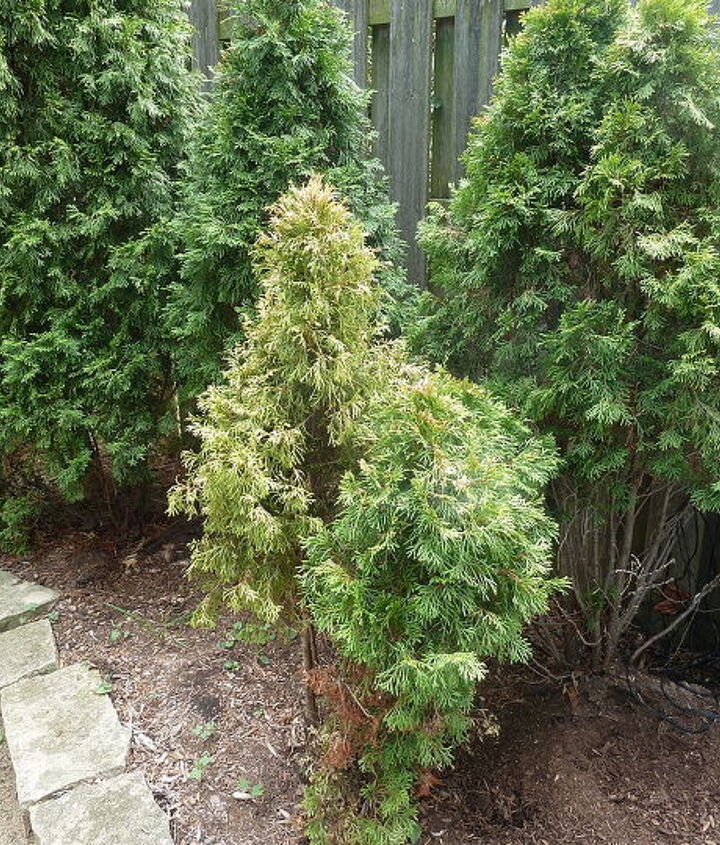q can these trees be saved, gardening