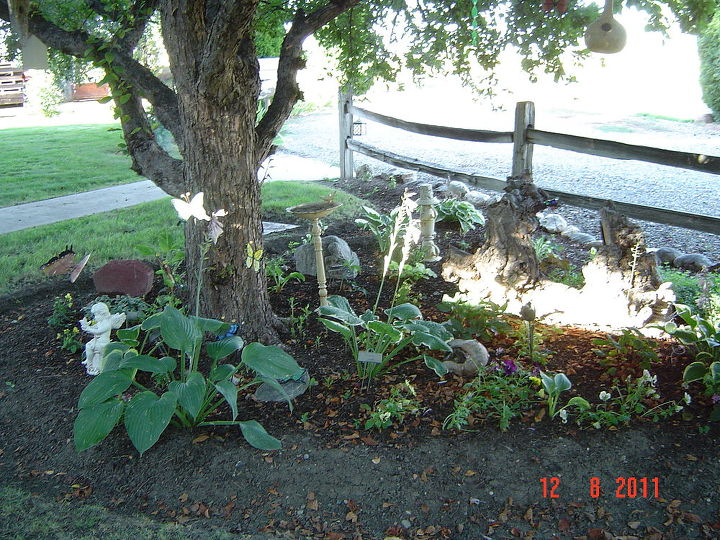 The tree is a flowering crab.  Removed rock and planted shade plants here - mostly hosta