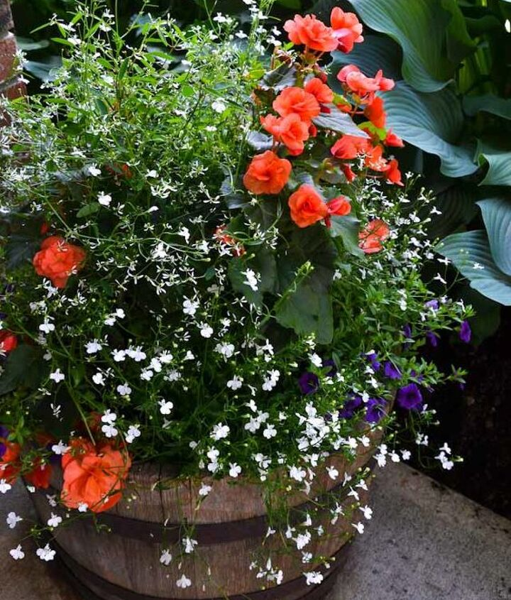 Another fab cheat... place a hanging basket on top of a barrel full of soil. Instant amazing and no planting required.