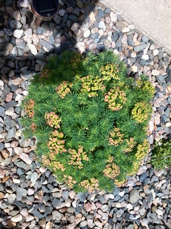 Can anyone identify this plant? It was situated in a sunny location at our B & B in Dorset, MN