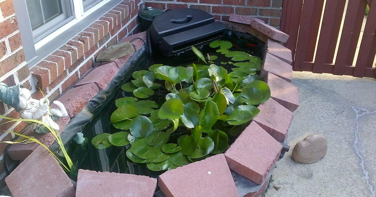 Patio Pond Hometalk