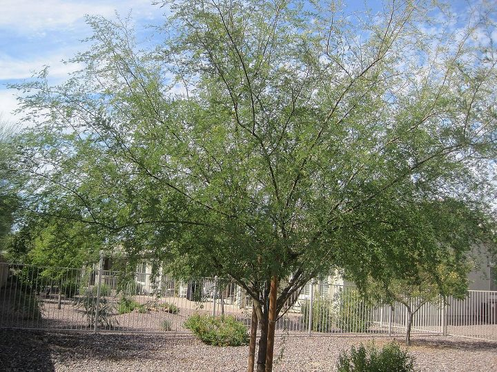 i need id on three trees in our backyard in az, flowers, gardening, This one has thorns
