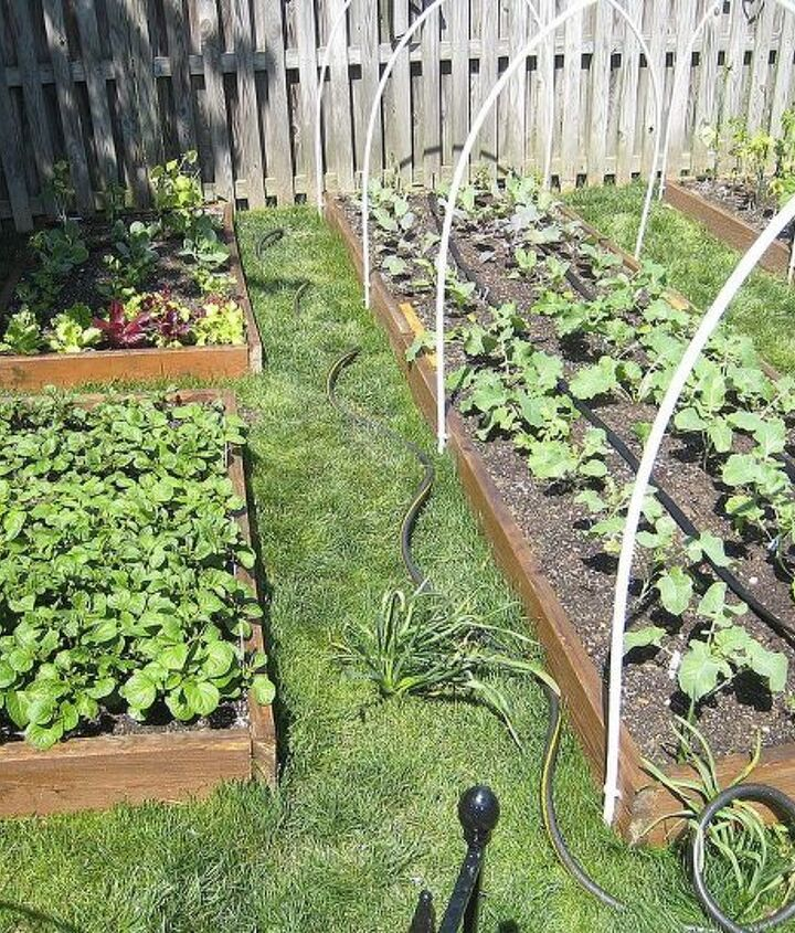 7 differant varieties of potaoes in the first bed.broccoli, cauliflower and kale in the second bed