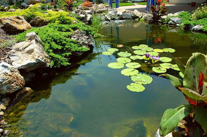 Pond with waterlillies and procumben juniper. This pond project won an International award from the Association of Pool and Spa Professionals (APSP) Silver medal for waterfeatures. www.deckandpatio.com