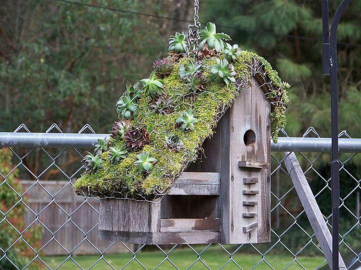 gardening, gardening, succulents