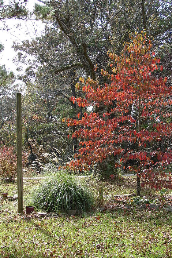 fall in rural north alabama, flowers, landscape, outdoor living