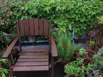 My lush passion vine is featured in a 2010 entry on Blogger @  http://www.thelastleafgardener.com/2010/10/blog-post.html