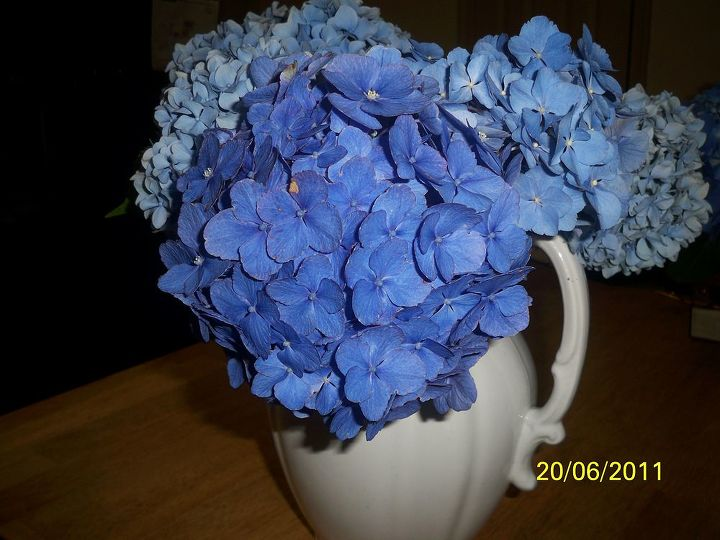 A mixture from two different Hydrangeas. The big one in front is the mother-in-law plant.