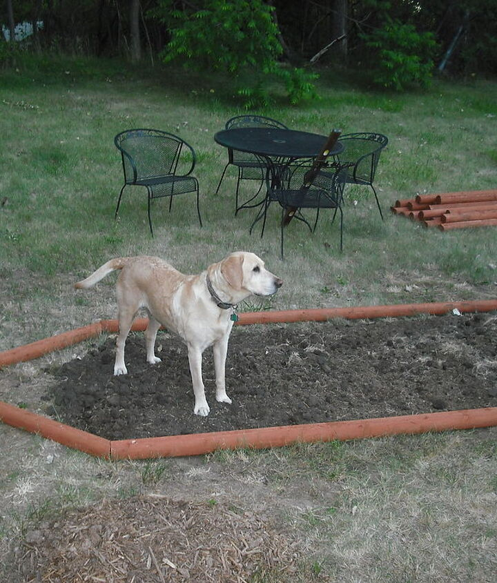 Ginger decided she wanted to help me layout soil.....urrrrr