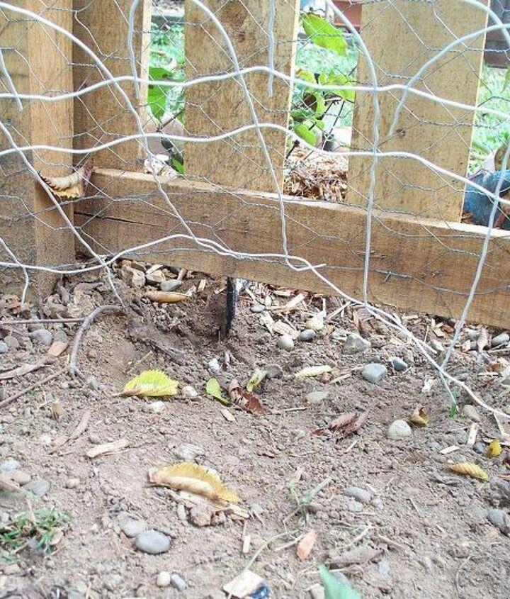 digging dog, fences, flowers, gardening